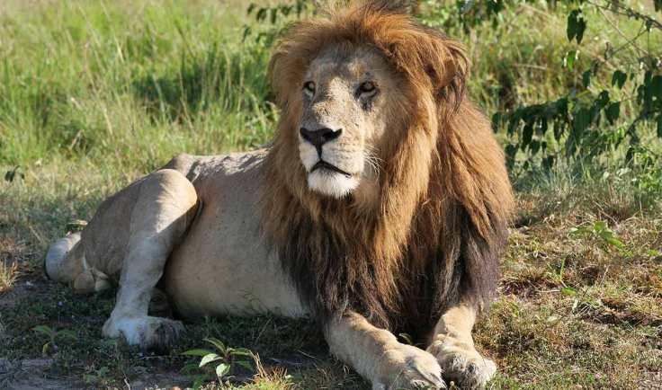 generation-x-self-help-travel-lion