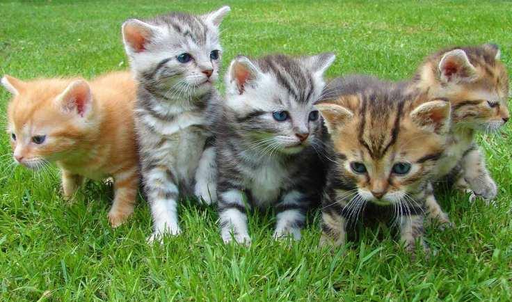 generation-x-pets-kittens