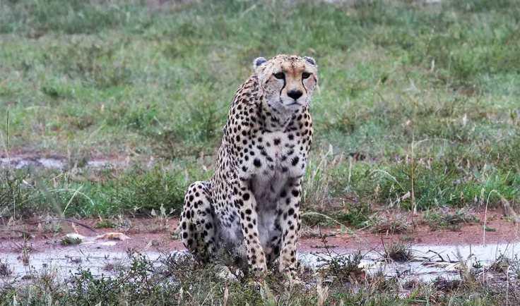 generation-x-travel-cheetah