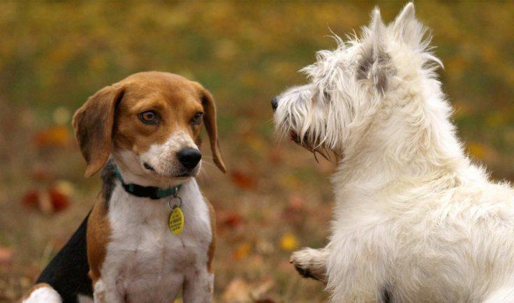 generation-x-pets-pups