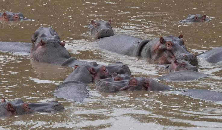 generation-x-travel-africa-hippos
