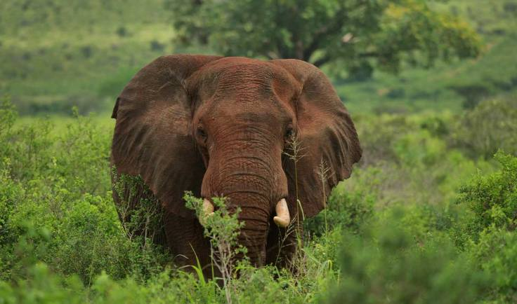 generation-x-travel-africa-elephant
